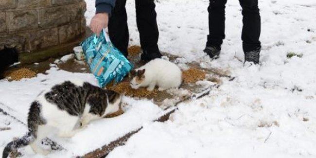 Kadıköy Belediyesi, sokaktaki hayvanlara mama dağıttı