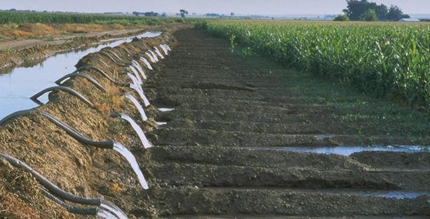 Kanalizasyon suyuyla tarım!