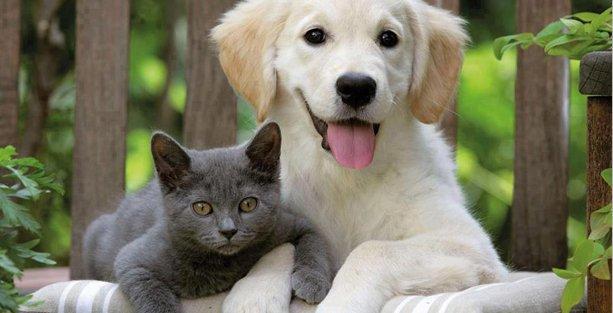 Kedi köpek maması ihtiyaçlarınızı nasıl karşılıyorsunuz?