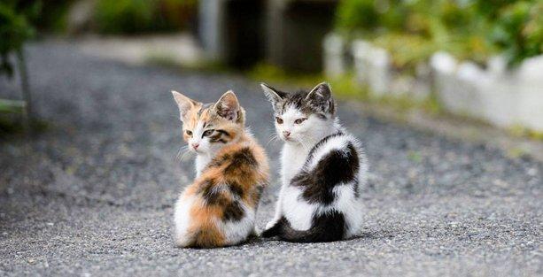 Kedileri besleyen İTÜ'deki yemekhane çalışanı hakkında tutanak tutuldu