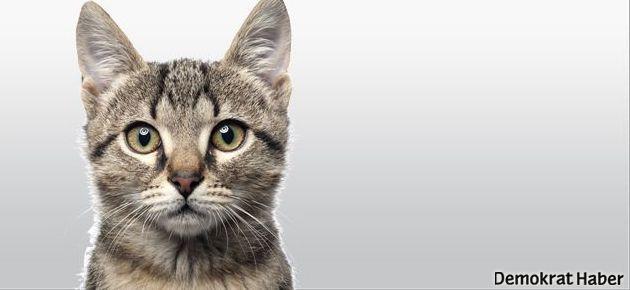 Kedileri ne kadar tanıyorsunuz?