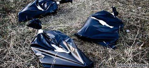 Kiev'de yeniden sokak köpeği katliamı