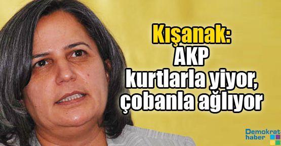 Kışanak: AKP kurtlarla yiyor, çobanla ağlıyor