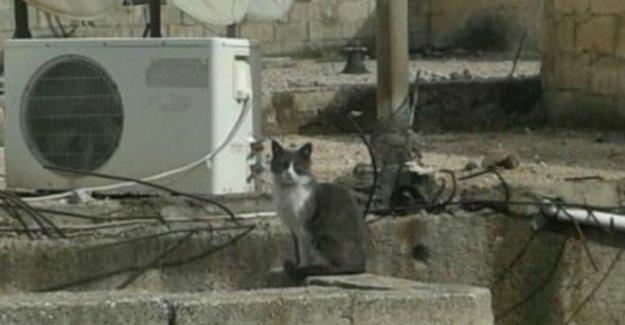 Kobani'de evini bekleyen kedi: Gewre