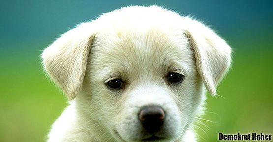 Köpek öldüren belediyeye ceza kesildi