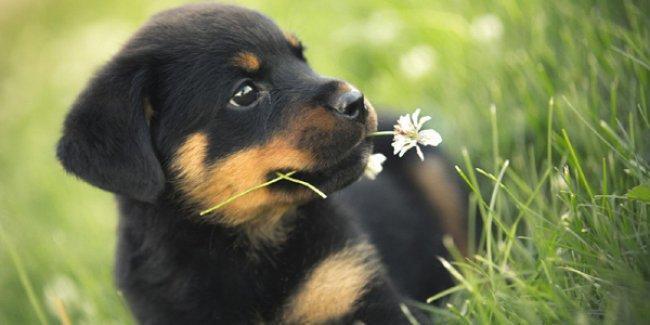 Köpekler bir insanın ne kadar güvenilir olduğunu anlayabiliyor