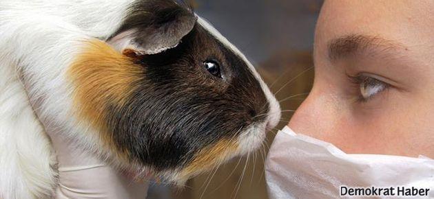 Kozmetikte hayvan deneyleri sona eriyor