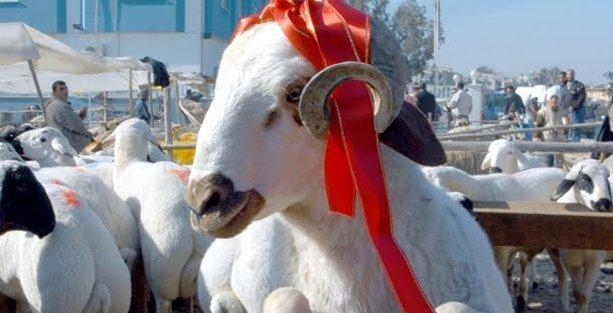 Kurban Bayramı'nda Vegan Festivali