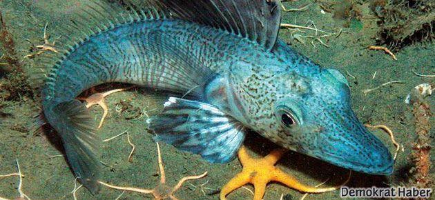 Kutup balıkları neden oldukları yerde donup kalmıyor?