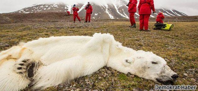 Kutupta dünyayı ürküten ölüm