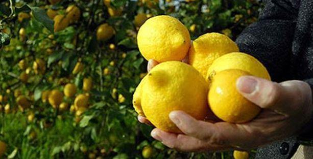 Limon Ağustos ayının da en pahalı ürünü oldu