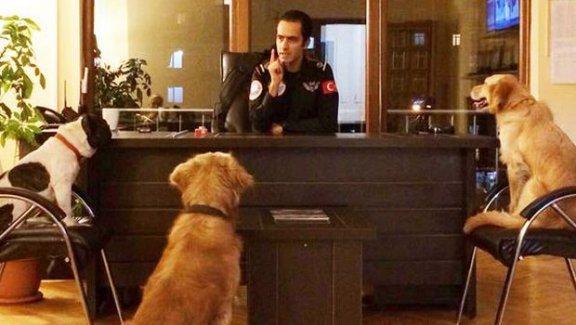 Maltepe Belediyesi 3 sokak köpeğini işe aldı