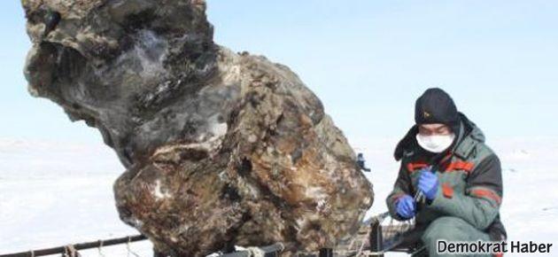 Mamut ölüsünde sıvı halde kana rastlandı