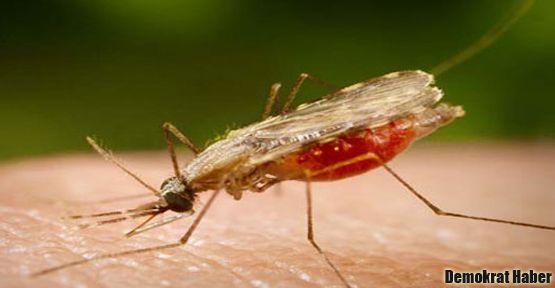 Mardin'de sıtma salgını şüphesi