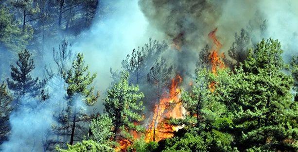 Milas'taki yangın termik santrali de tehdit ediyor