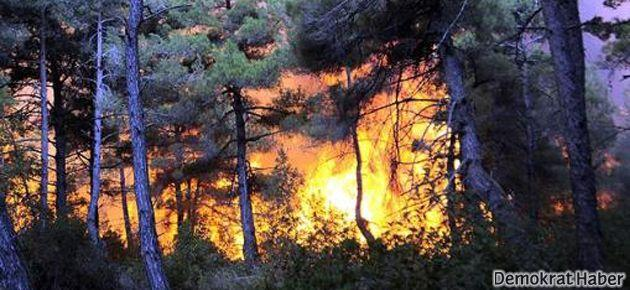 Muğla ormanları yanıyor
