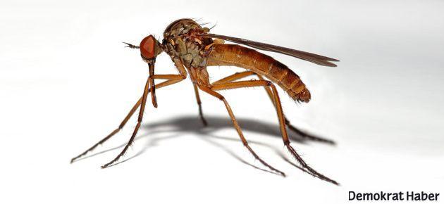 Naziler sivrisinekleri silah olarak kullanmayı düşünmüş