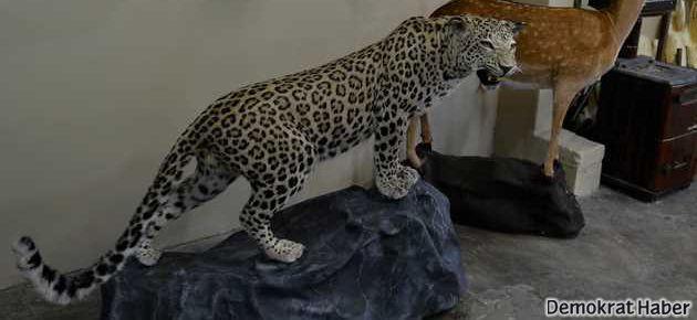 O leopar ölümsüzleşti