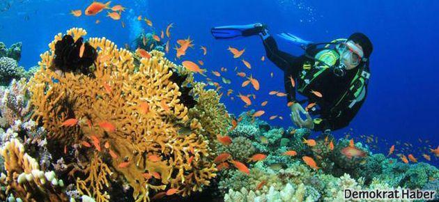 Okyanuslardaki büyük tehlike