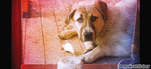 Olimpos ve Çıralı'da hayvan katliamı