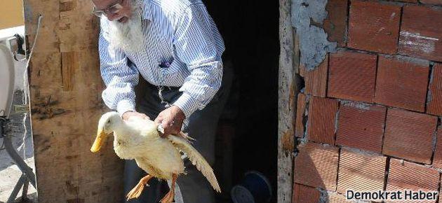 Ördeğe tecavüze 437 TL ceza