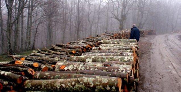 Orman Bakanlığı, beş yılda 130 bin hektar ormanı tahsis yoluyla yok etti