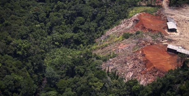 Orman katliamları nedeniyle 'yağışlar yer değiştiriyor'