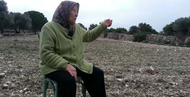 'Paraları onların olsun, ben zeytin ağaçlarımı istiyorum'