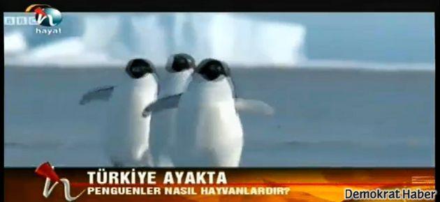 Penguenler, bu kez Erdoğan sokaktayken ekrandaydı