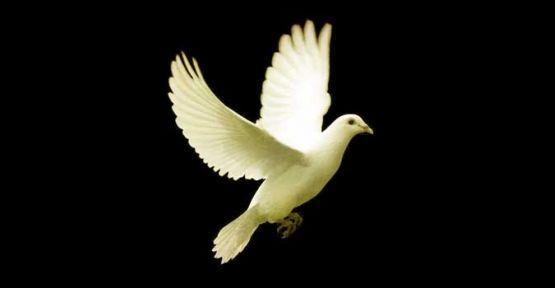 Ruh Halimin güvercin tedirginliği