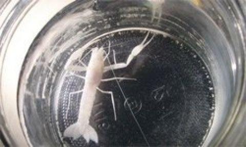 Sekiz yeni hayvan türü keşfedildi