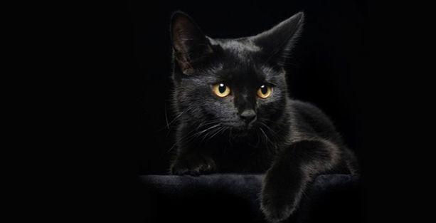 Siyah kediler daha az seviliyor