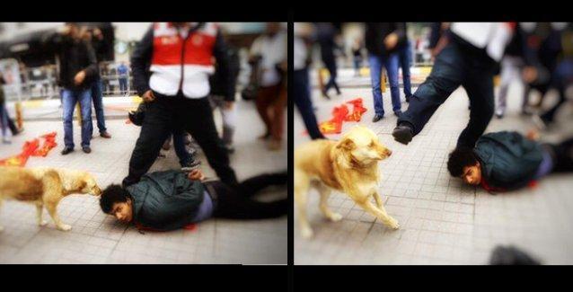 Taksim'de 'o an': Gözaltına alınan KP'li genç, yardıma gelen köpek ve polis şiddeti