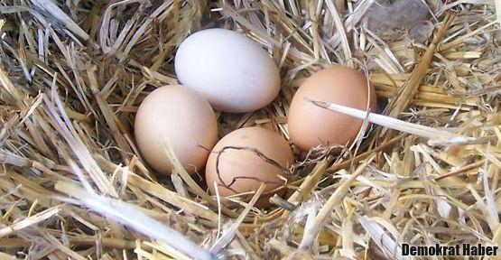 Taze yumurta nasıl anlaşılır?
