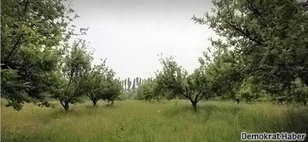 TMMOB: Erciş'te konut yapılmak istenen araziler tarım arazisidir