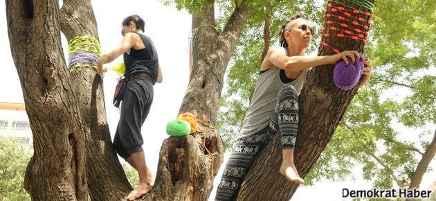 Üç beş 'çapulcu' ve ağaç ormanları kurtardı