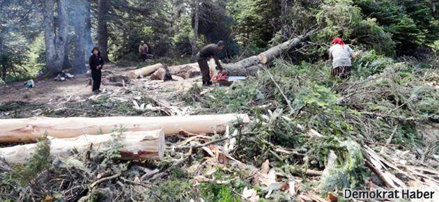 Uludağ'da teleferik için 4 bin ağaç kesildi