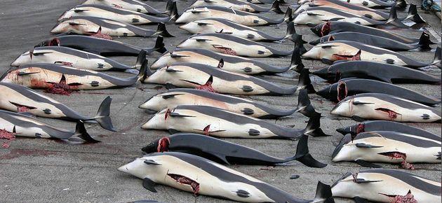 Uluslararası Adalet Divanı balina avını yasakladı
