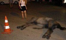 Adana'da atla yük taşımak yasaklandı