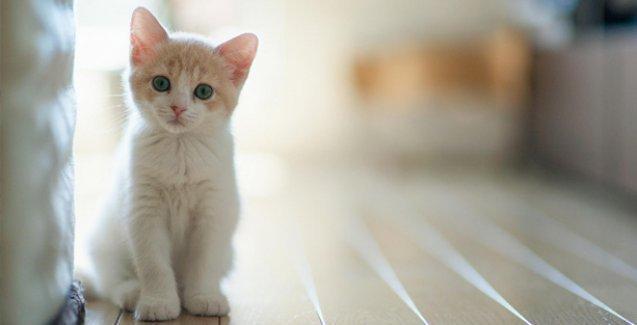 Veterinerler seçim öncesi kedileri uyardı: Trafolardan uzak durun
