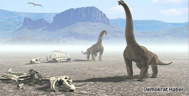 Yeni bir dinozor türü keşfedildi