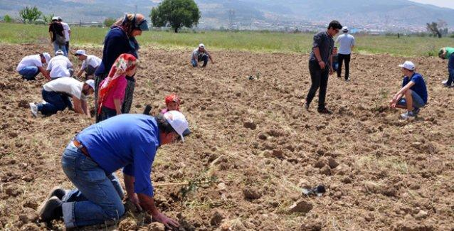 Yırca'da hukuksuzca kesilen binlerce ağacın yerine fidanlar dikildi